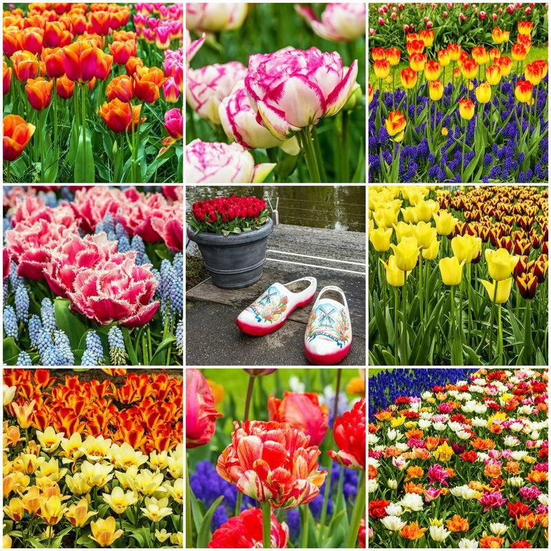 Zwiedzanie Festiwal Kwiatów z noclegiem