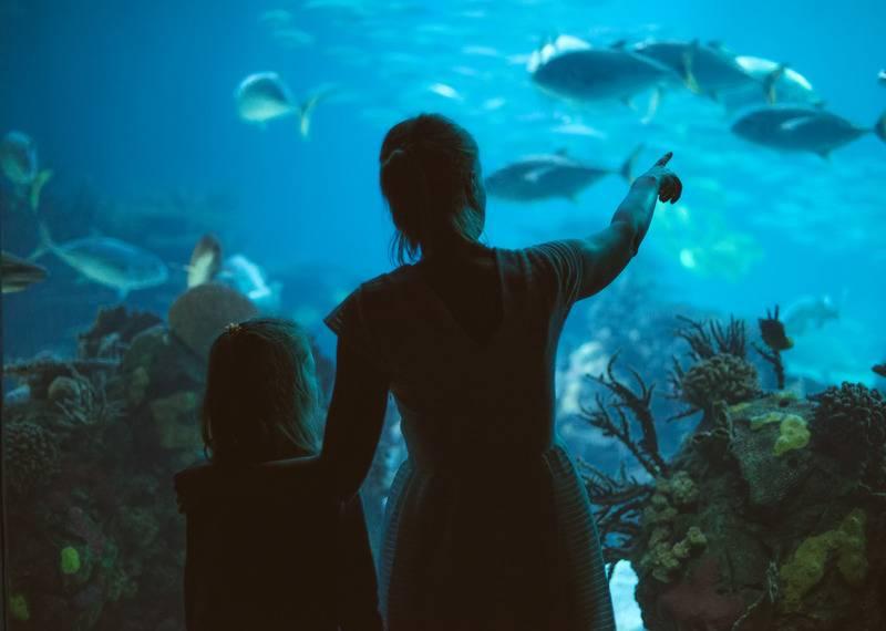 Wizyta w Oceanarium Stralsund