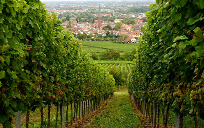 Wycieczka Zielona Góra - Lubuski Szlak Wina