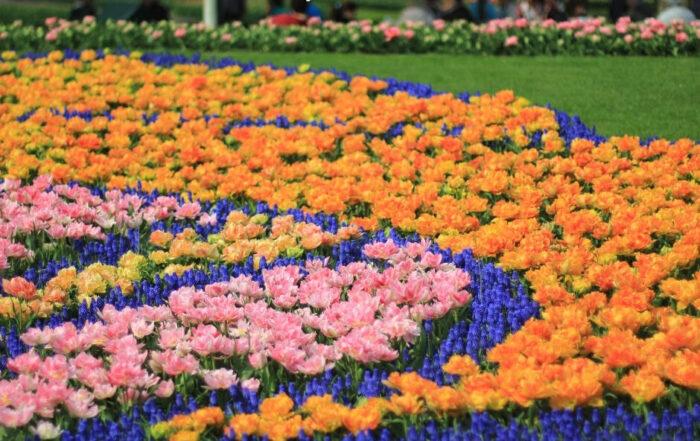 Ogrody Keukenhof w Niderlandach